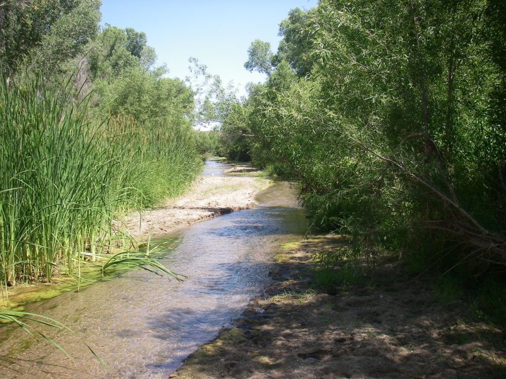 Native species of the month gila topminnow in the current for Gila river fishing