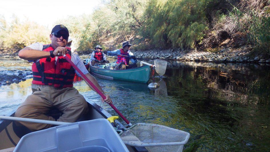 A day in the field lower salt river canoe electrofishing for Lower salt river fishing