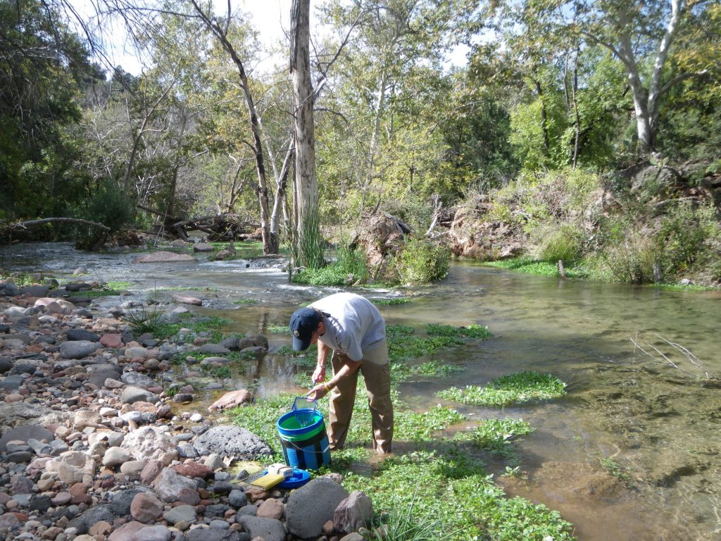 Native fish survey in Fossil Creek.